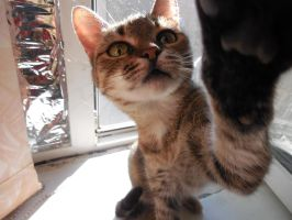 My cat ) by Victoria-Kalughian