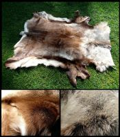 Huge Reindeer Pelt by CabinetCuriosities