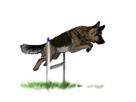 CA :: Agility Trial by crystalleung7