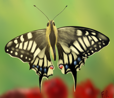 Swallowtail by Forumsdackel