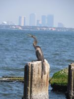 Anhinga In The City by Malidicus