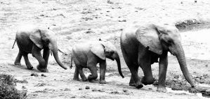 more off africa by lindaatje