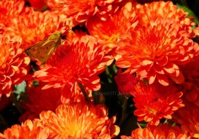 Orange by Bimmi1111