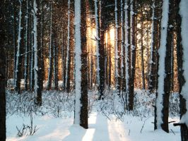 Golden Sparks of Snow by iluvobiwan91