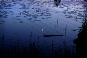 Quiet Evening by AndySimmons