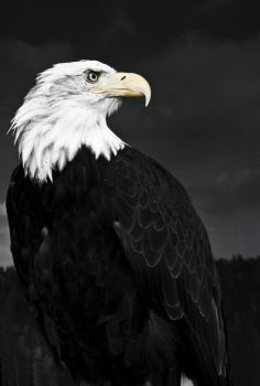 Mighty Eagle by sophaclistic