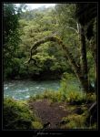 Hollyford by Crooty