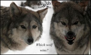 Which Wolf Wins by DragonWolfACe