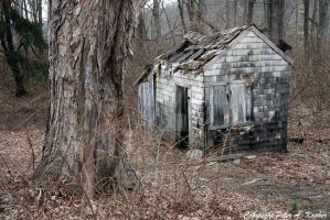 Neglected by peterkopher