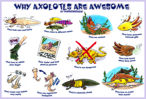 Why axolotls are awesome by Morrison3000