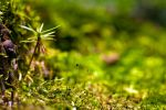 In the Moss by b-a88