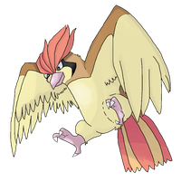 Pidgeotto by suicune