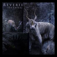Reverie: Details by candid-crocodiles