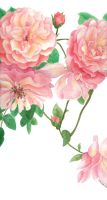Roses in the Summer by lollirose