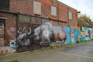 Roa by IlanoPhotography