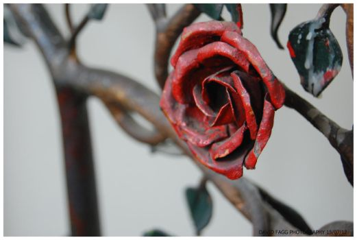 Metal Rose by snappy-dave