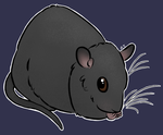 black rat by littletindog