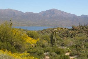 Bartlett Lake with Saguaros by PatGoltz