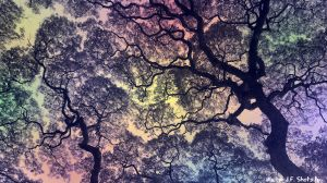 The Trees Above Me_2 by WalterJF