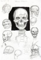 Skull studies by Thevakien
