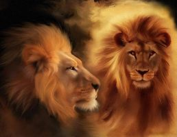 lions art by stephan8