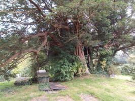 The ancient yew tree by buttercupminiatures