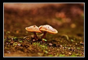 Tiny Life Protected by Friends by TeaPhotography