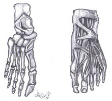 Feet Anatomy Drawing by sassylilmommie