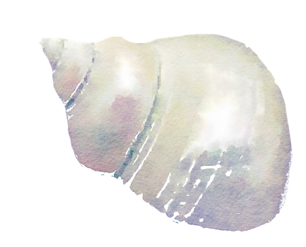 FREE TO USE png seashell free watercolor by anjelakbm