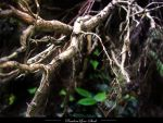Roots 01 by AnitaJoy-Stock
