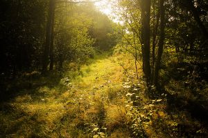 142. magical forest by littleconfusion