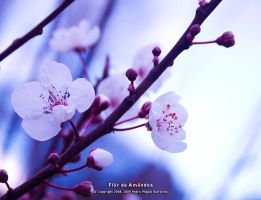 Flor de Amendoa by too-much4you