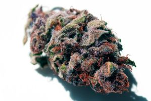 Purple Indica by amathis