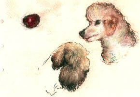 Poodle and terrier by clotus