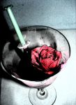 surgical rose by bodietjie88