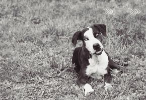 Unnamed Furbaby BW II by CandiceSmithPhoto
