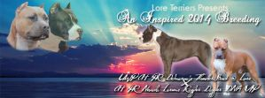 Lore Terriers Breeding Ad HEADER by Destiny-Carter