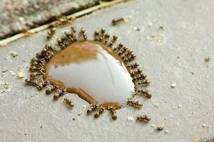 Horde of Ants by DoC-OxY