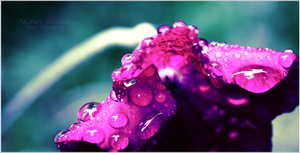 'Pink Water Drops' by AMayShulerphotogrphy