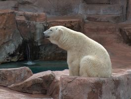 Polar Bear Stock by Gnewi-Stock