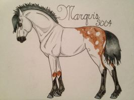 3004 Marquis by walktrotcanter7