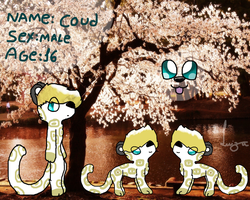 Coud by Babedoge
