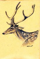 Chital by The-Darkwolf