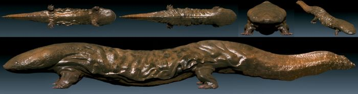 Hellbender model by Bawarner