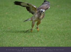 Falcon 3 - Take off! by ceeek-stock