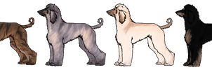 Afghan Hound Imports - 1 Left!! by HazelPatchKennels