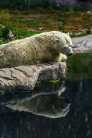 Polar Bear with Down Syndrome by JustMisha