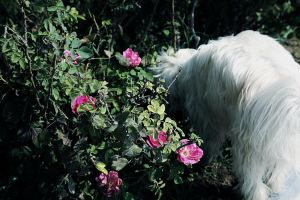 Curious Mike in the flower Bush by Noora7at