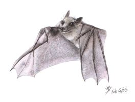 Baby Bat by catnmaus