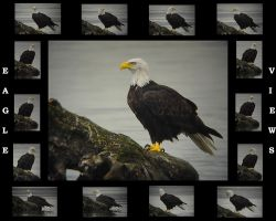 Eagle Views V2 by swashbuckler